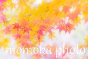 batch__MG_0581.jpg